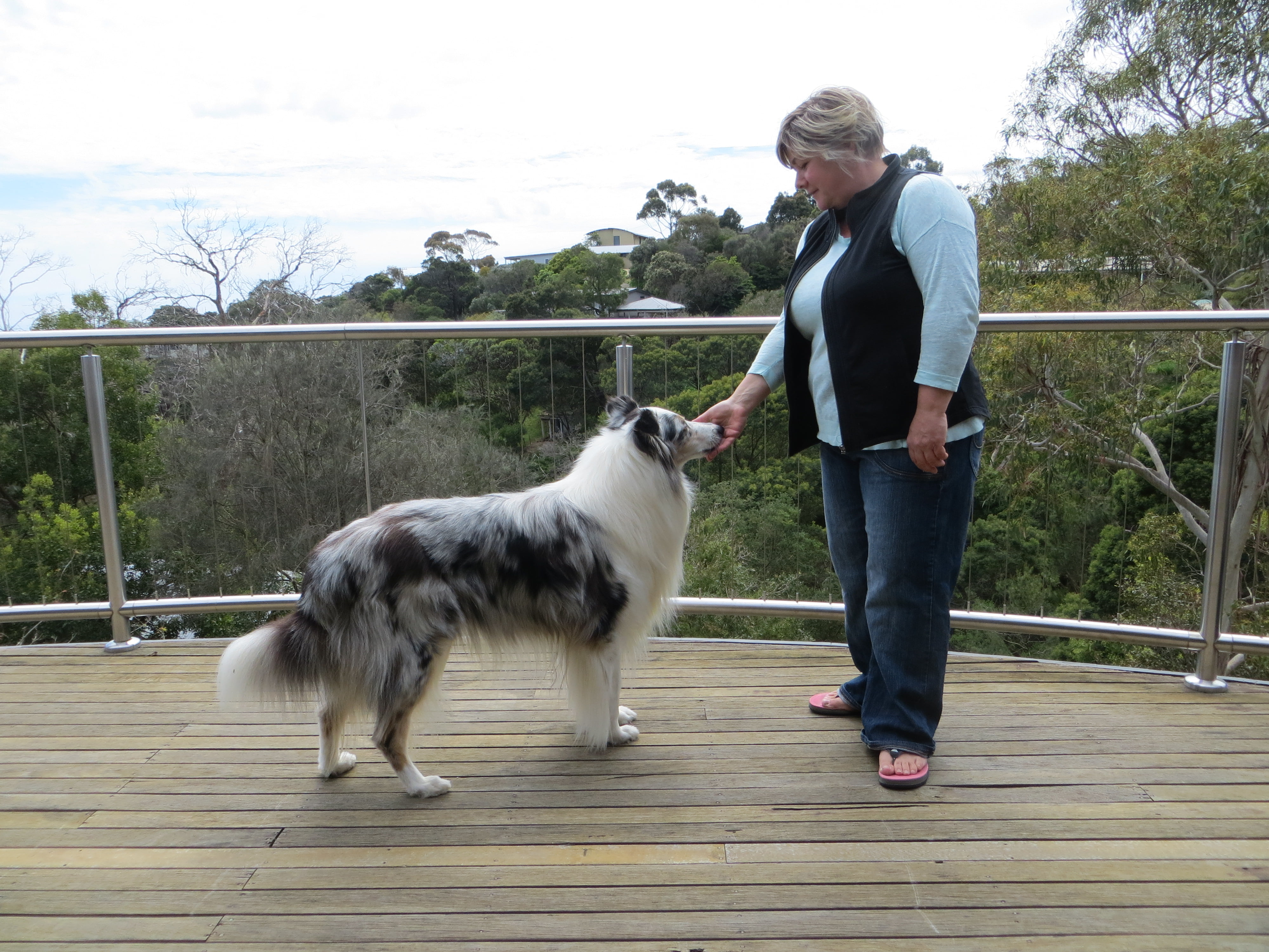 one simple skill to stop your dog mugging biting and jumping for